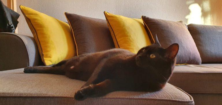 Coussins en feutrine posés sur un canapé.